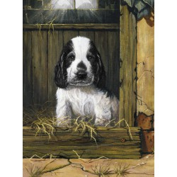 Painting by numbers SPANIEL...